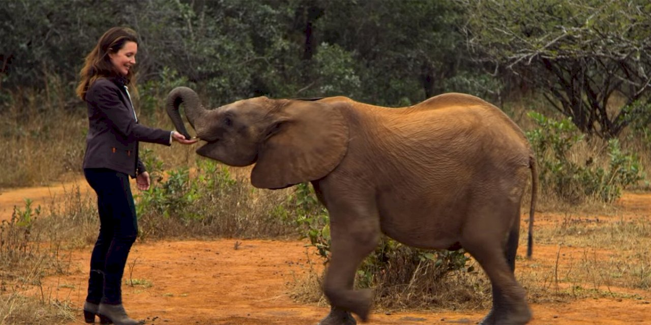 Netflix's Holiday In The Wild Movie Review: A Heartwarming Film If You Love Elephants
