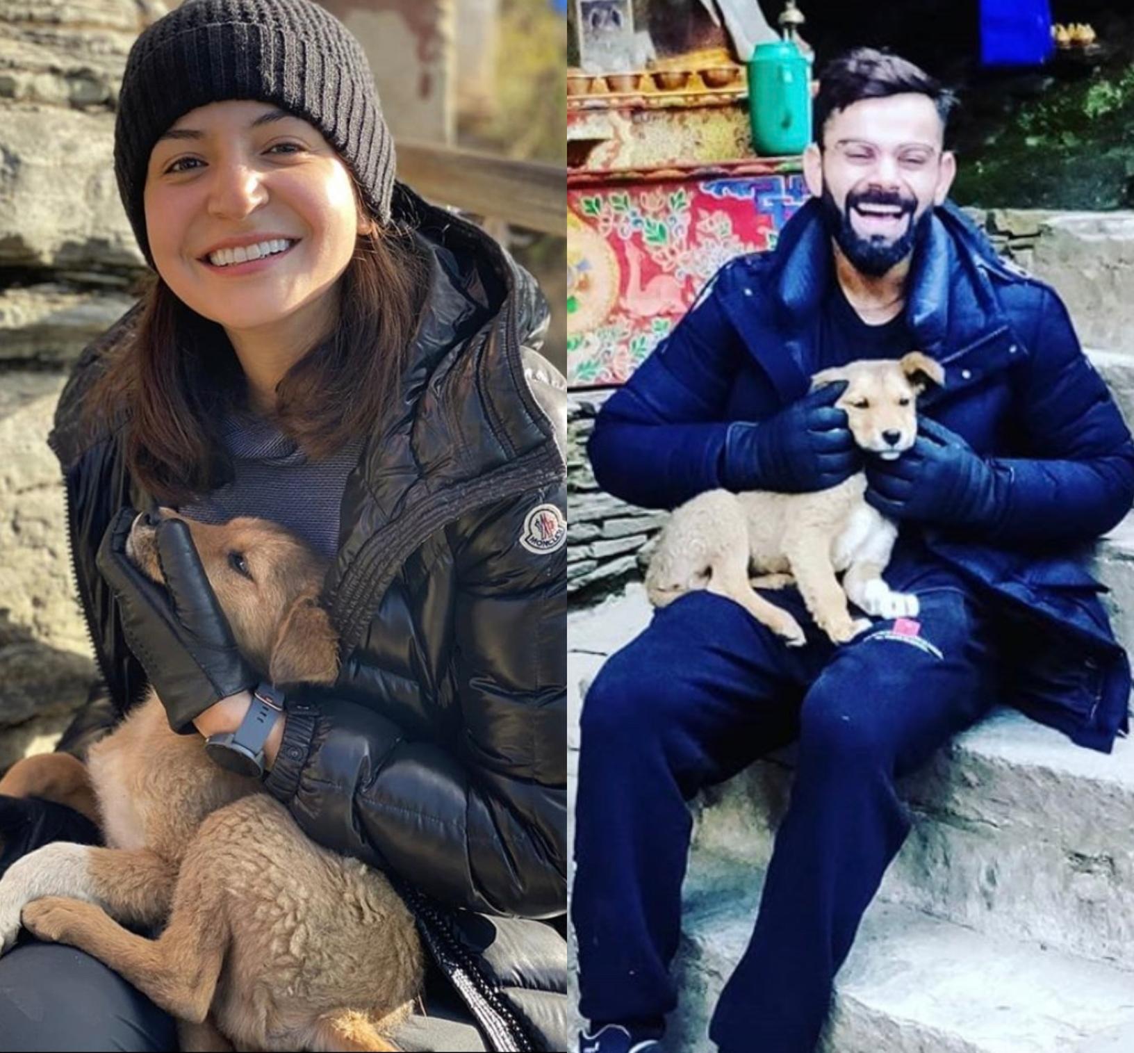 Anushka Sharma And Virat Kohli's Love For Animals Melts Everyone's Hearts