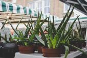 Skin Care in Dubai: 5 Reasons to Add Aloe Vera to Your Routine