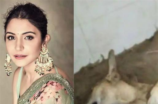 Anushka Sharma Expresses Dismay Over Animal Cruelty in Latest Instagram Post