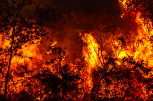 Australian Bushfires: New South Wales, Victoria and South Australia on High Alert