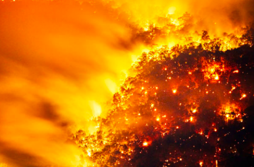 Australian Bushfire Crisis: Extreme Conditions Predicted, People Asked to Flee Affected Areas