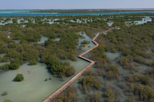 Abu Dhabi's Mangrove Walk: Thousands of Visitors Head to Al Jubail Island