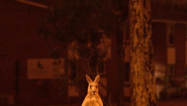 Australian Wildlife Bushfires: Heartbreaking Pictures