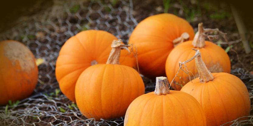 10 Major Health Benefits of Pumpkin Seeds You Should Know
